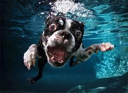 Cane in acqua, come fargli superare la paura