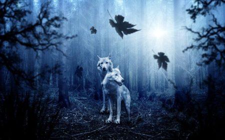 Lupo: un mammifero presente nelle favole e nei modi di dire
