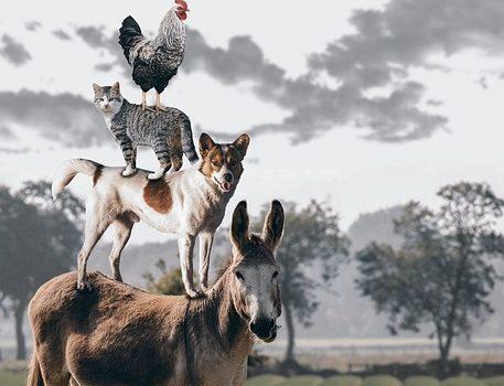Animali con la m: ecco quelli che conosciamo e non