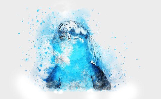 Delfini: quali sono quelli di mare e quale quelli di fiume?
