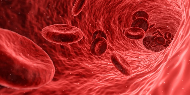 Animali a sangue freddo e caldo: quali sono, caratteristiche emoglobiniche