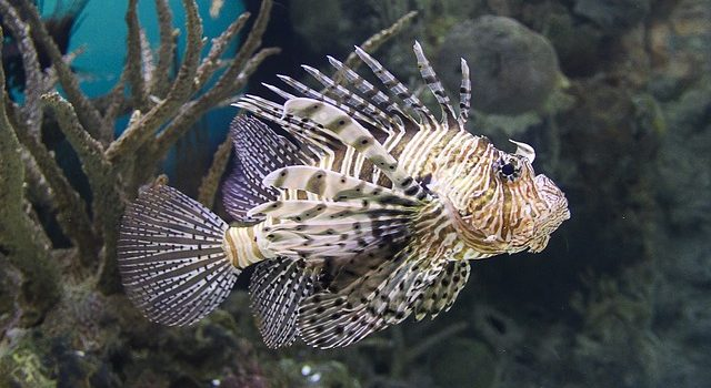 Pesci velenosi: esistono? Quali sono e dove vivono?