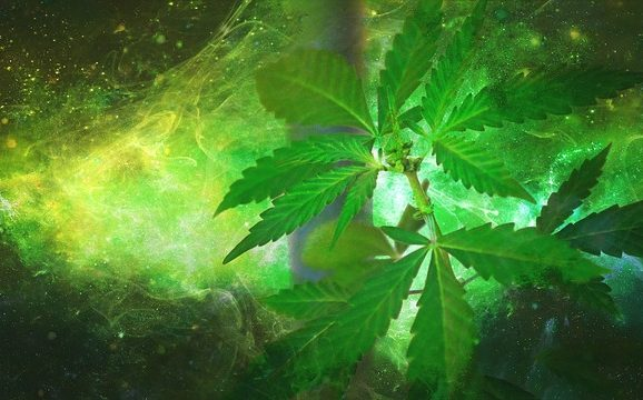 Marijuana light: in aumento le vendite
