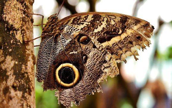Le 15 farfalle più belle del mondo: elenco completo e dettagliato