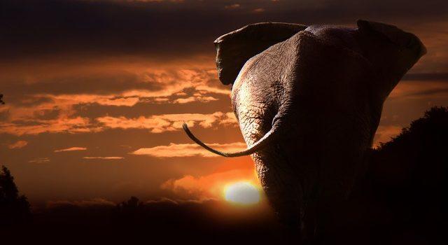 Animali savana: quali sono, dove vivono e curiosità