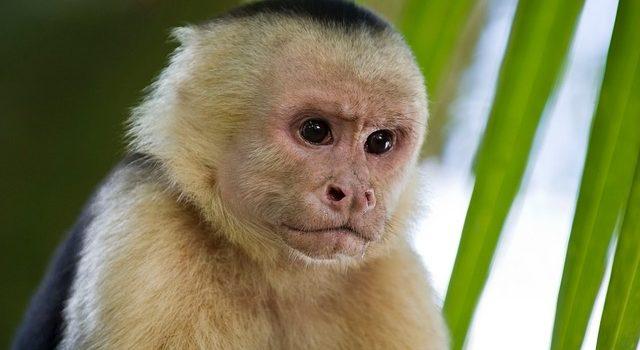 Scimmia domestica: dove comprarla in Italia e a che prezzo?