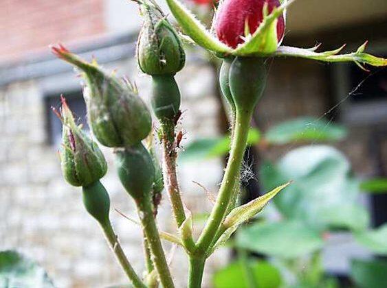 Parassiti di piante fiorifere: come agiscono gli acari? Come proteggere le piante da essi?