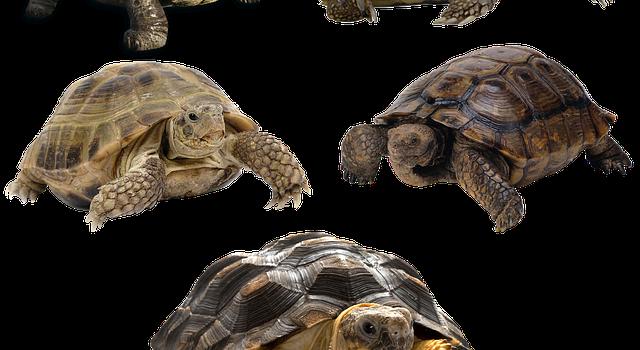 Tartarughe: quali sono le specie di terra e d'acqua?