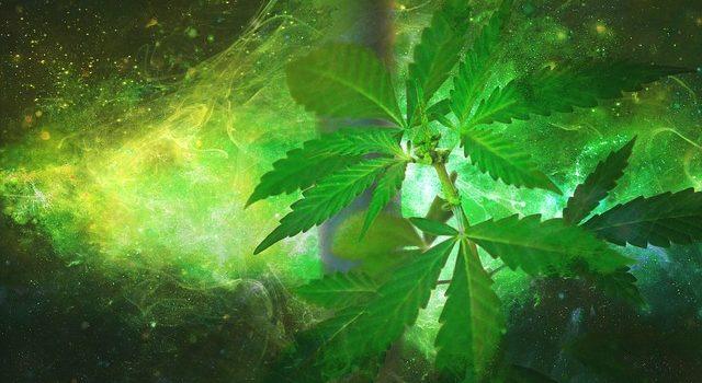 Marijuana light: in aumento le vendite